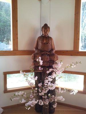 Buddha Dojo Tamanga